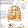 О том, как я систематизировала знания в области анатомии и физиологии 5